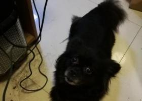 寻狗启示,寻找小黑狗,嘴部一圈白毛,宝塔路,镇江,广东山庄,它是一只非常可爱的宠物狗狗,希望它早日回家,不要变成流浪狗。