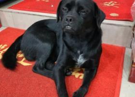 寻狗启示,黑色土狗牙齿有点露出来合不上,它是一只非常可爱的宠物狗狗,希望它早日回家,不要变成流浪狗。