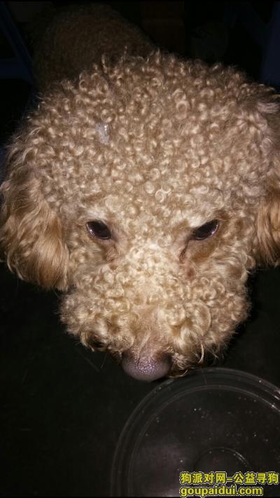 三明寻狗网,寻找狗狗主人!快点来带我回家!!!!,它是一只非常可爱的宠物狗狗,希望它早日回家,不要变成流浪狗。