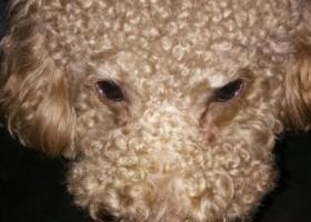 寻狗启示,寻找狗狗主人!快点来带我回家!!!!,它是一只非常可爱的宠物狗狗,希望它早日回家,不要变成流浪狗。