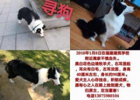 寻狗启示,宝贝回家,它是一只非常可爱的宠物狗狗,希望它早日回家,不要变成流浪狗。
