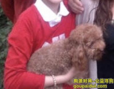 周口丢狗,13年丢的,想知道它过的好不好,它是一只非常可爱的宠物狗狗,希望它早日回家,不要变成流浪狗。