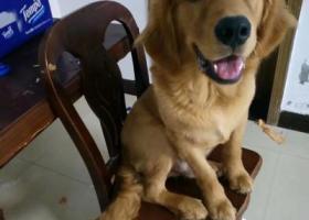 寻狗启示,寻找爱犬,盼他平安回家,它是一只非常可爱的宠物狗狗,希望它早日回家,不要变成流浪狗。