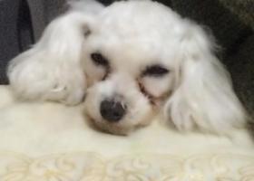 寻狗启示,重金找狗,它是一只非常可爱的宠物狗狗,希望它早日回家,不要变成流浪狗。