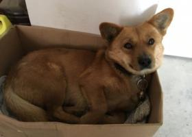 寻狗启示,南通港闸区丢狗,很聪明,叫小王会有反应,它是一只非常可爱的宠物狗狗,希望它早日回家,不要变成流浪狗。