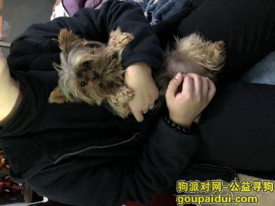 寻狗启示,2018年1月13日上海浦东新区浦三路高科西路交叉口附近走失,它是一只非常可爱的宠物狗狗,希望它早日回家,不要变成流浪狗。