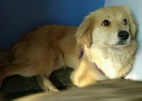 寻狗启示,广州白云区祥景花园站附近捡到,寻狗狗主人,它是一只非常可爱的宠物狗狗,希望它早日回家,不要变成流浪狗。