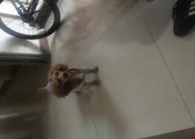 寻狗启示,成都塔子山公园地铁站附近捡到,它是一只非常可爱的宠物狗狗,希望它早日回家,不要变成流浪狗。