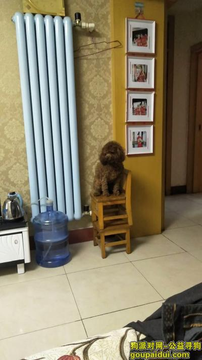 三门峡找狗,找到请打13939885082,必有重谢,它是一只非常可爱的宠物狗狗,希望它早日回家,不要变成流浪狗。