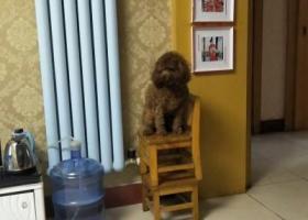 寻狗启示,找到请打13939885082,必有重谢,它是一只非常可爱的宠物狗狗,希望它早日回家,不要变成流浪狗。