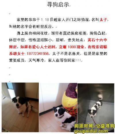 黄石找狗,黄石市黄石港区黄石十六中寻找爱犬,它是一只非常可爱的宠物狗狗,希望它早日回家,不要变成流浪狗。