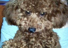 寻狗启示,泸州市寻狗启示 请看到的私信我,它是一只非常可爱的宠物狗狗,希望它早日回家,不要变成流浪狗。