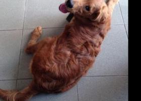 寻狗启示,如东县马塘镇s334省道富源职业学校西100北面自家院子丢失,它是一只非常可爱的宠物狗狗,希望它早日回家,不要变成流浪狗。