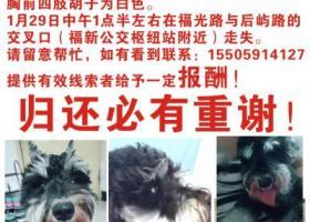 寻狗启示,求万能的网友们帮忙,我家狗狗丢了,它是一只非常可爱的宠物狗狗,希望它早日回家,不要变成流浪狗。
