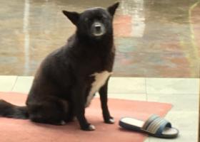 寻狗启示,宁波海曙鄞江啤酒厂附近找黑色母狗 名字叫黑仔,它是一只非常可爱的宠物狗狗,希望它早日回家,不要变成流浪狗。