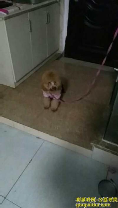 嘉兴找狗主人,12.31日晚上在嘉兴火车站附近海底捞捡到泰迪一只,它是一只非常可爱的宠物狗狗,希望它早日回家,不要变成流浪狗。