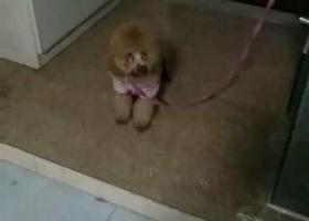 寻狗启示,12.31日晚上在嘉兴火车站附近海底捞捡到泰迪一只,它是一只非常可爱的宠物狗狗,希望它早日回家,不要变成流浪狗。