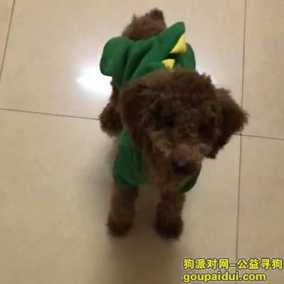 玉林找狗,急找1月30在玉林燕京路水军塘村走丢的泰迪狗狗,它是一只非常可爱的宠物狗狗,希望它早日回家,不要变成流浪狗。