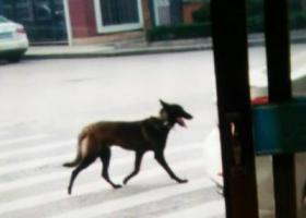 寻狗启示,福建福鼎的朋友们帮帮忙 寻狗狗  黑马犬,它是一只非常可爱的宠物狗狗,希望它早日回家,不要变成流浪狗。