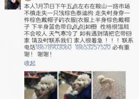 寻狗启示,青岛市市北区鞍山一路市场不不慎丢失一只浅棕色泰迪 走失时身穿棕色戴帽子衣服,它是一只非常可爱的宠物狗狗,希望它早日回家,不要变成流浪狗。