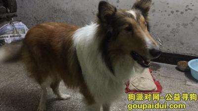 惠州寻狗主人,速度联系,每天需要时间去照顾,请回归失主,它是一只非常可爱的宠物狗狗,希望它早日回家,不要变成流浪狗。