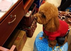 寻狗启示,寻狗启事,找到后必会酬谢!,它是一只非常可爱的宠物狗狗,希望它早日回家,不要变成流浪狗。