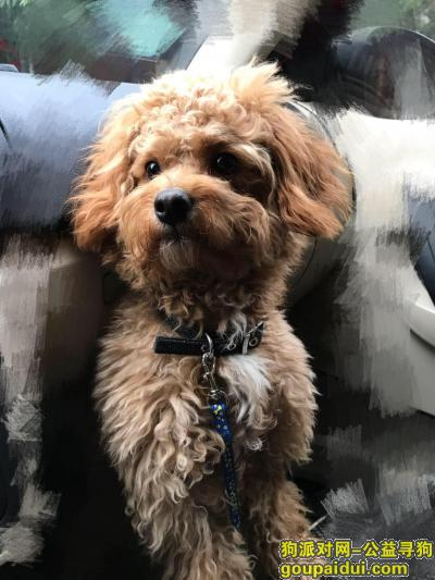 玉林寻狗网,找到了,它是一只非常可爱的宠物狗狗,希望它早日回家,不要变成流浪狗。