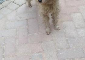 寻狗启示,南宁市安吉大道大商汇寻狗主人,它是一只非常可爱的宠物狗狗,希望它早日回家,不要变成流浪狗。