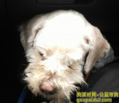 南通捡到狗,1月28日发现于金南小区,它是一只非常可爱的宠物狗狗,希望它早日回家,不要变成流浪狗。