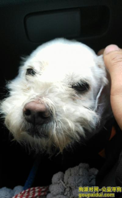 寻狗启示,1.28发现于金沙金南小区,它是一只非常可爱的宠物狗狗,希望它早日回家,不要变成流浪狗。