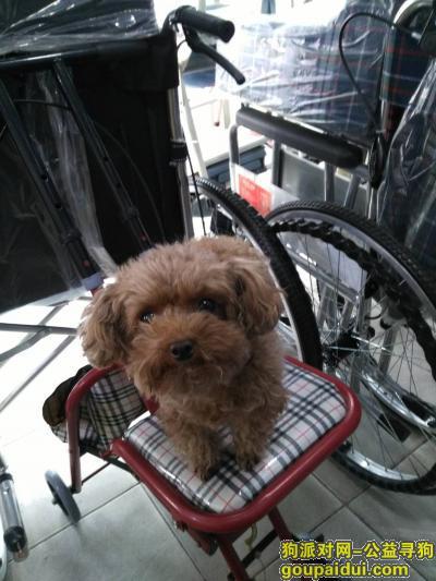 徐州找狗主人,2.7号白天在二院东边路上捡到小泰迪一只,它是一只非常可爱的宠物狗狗,希望它早日回家,不要变成流浪狗。