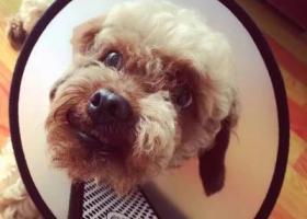 寻狗启示,狗狗2.7日在保利观湖国际一期丢失,它是一只非常可爱的宠物狗狗,希望它早日回家,不要变成流浪狗。