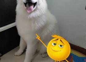 寻狗启示,寻找爱犬——贝壳,我在等着你回家,它是一只非常可爱的宠物狗狗,希望它早日回家,不要变成流浪狗。