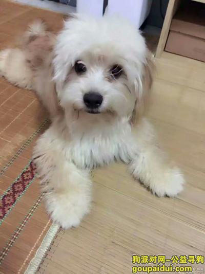上饶寻狗启示,【酬谢】找狗,狗狗丢失,在鄱阳帅特龙附近丢失,它是一只非常可爱的宠物狗狗,希望它早日回家,不要变成流浪狗。
