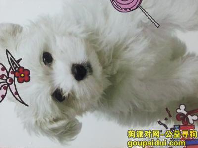 许昌找狗,我们家狗狗走丢了有几个月希望好心人帮我们找回来!,它是一只非常可爱的宠物狗狗,希望它早日回家,不要变成流浪狗。