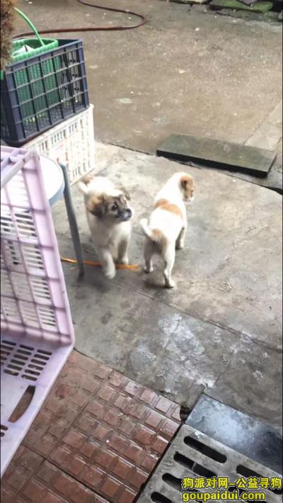 新余寻狗网,主人很想念这条狗,请大家帮帮忙,谢谢了。,它是一只非常可爱的宠物狗狗,希望它早日回家,不要变成流浪狗。