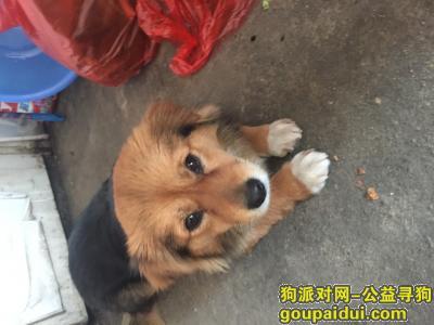 桐城寻狗,感情很深 如有找到 重金酬谢,它是一只非常可爱的宠物狗狗,希望它早日回家,不要变成流浪狗。