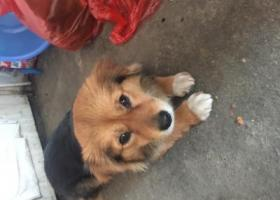 寻狗启示,感情很深 如有找到 重金酬谢,它是一只非常可爱的宠物狗狗,希望它早日回家,不要变成流浪狗。