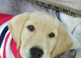 寻狗启示,#泸州寻狗#       我家狗子叫里拉,它是一只非常可爱的宠物狗狗,希望它早日回家,不要变成流浪狗。