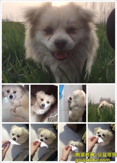 广安寻狗网,寻狗,胖墩,重金酬谢!,它是一只非常可爱的宠物狗狗,希望它早日回家,不要变成流浪狗。
