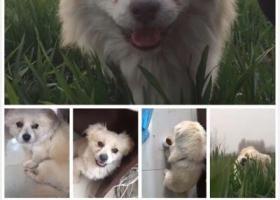 寻狗启示,寻狗,胖墩,重金酬谢!,它是一只非常可爱的宠物狗狗,希望它早日回家,不要变成流浪狗。