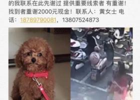 寻狗启示,2018年2月9号在三亚解放一路跃进路宝盛广场肯德基旁走失泰迪犬,它是一只非常可爱的宠物狗狗,希望它早日回家,不要变成流浪狗。