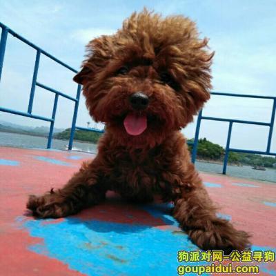 ,爱狗于2月7日上午,在平昌县伯坚广场周围,安居工程区附近遗失,请相互转发通告一下,它是一只非常可爱的宠物狗狗,希望它早日回家,不要变成流浪狗。