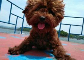 寻狗启示,爱狗于2月7日上午,在平昌县伯坚广场周围,安居工程区附近遗失,请相互转发通告一下,它是一只非常可爱的宠物狗狗,希望它早日回家,不要变成流浪狗。