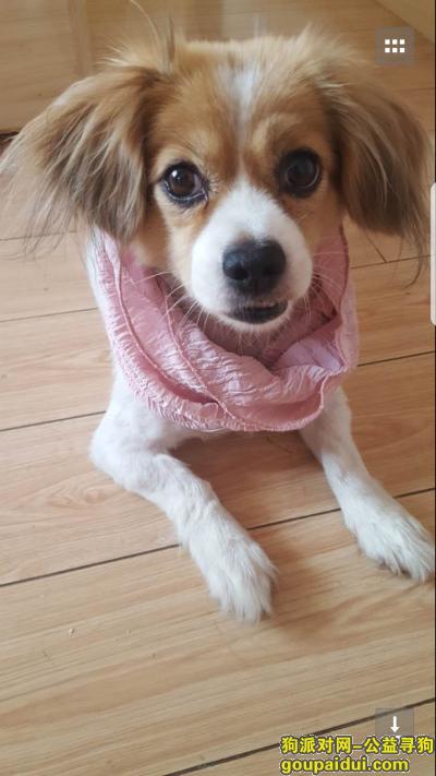 随州找狗,湖北省随州市寻狗谢谢,它是一只非常可爱的宠物狗狗,希望它早日回家,不要变成流浪狗。