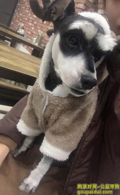 蚌埠寻狗网,寻找2月14日在怀远县魏庄街上丢失的狗,它是一只非常可爱的宠物狗狗,希望它早日回家,不要变成流浪狗。