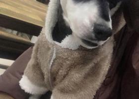 寻狗启示,寻找2月14日在怀远县魏庄街上丢失的狗,它是一只非常可爱的宠物狗狗,希望它早日回家,不要变成流浪狗。