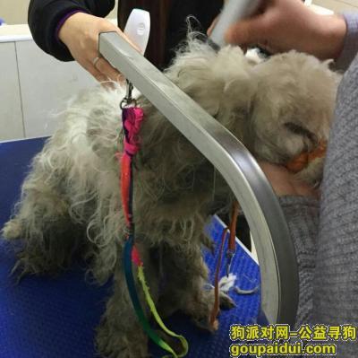 南通捡到狗,发现于通州金南小区。,它是一只非常可爱的宠物狗狗,希望它早日回家,不要变成流浪狗。