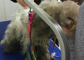 寻狗启示,发现于通州金南小区。,它是一只非常可爱的宠物狗狗,希望它早日回家,不要变成流浪狗。