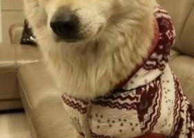 寻狗启示,我们家的狗狗叫秋田。小名叫田田.在2018年2.15日早上11.30走吏,它是一只非常可爱的宠物狗狗,希望它早日回家,不要变成流浪狗。